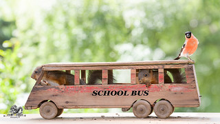 red squirrels in schoolbus with a bullfinch