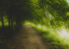 Under Natures Canopy (Sean McCammon) Tags: tree trees nature gallary canopy art gree leaves summer walking walk outside outdoors