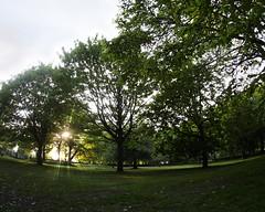 Harold Park Near Sunset (Mel_is_Moving) Tags: epl6 olympus pen sky trees outside green outdoor sunset grass fisheye leaves bradford westyorkshire uk