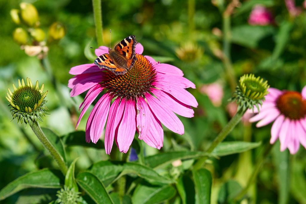 фото: Flower 237