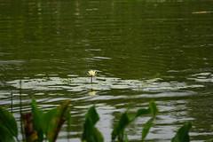 DSC00862.jpg (joe.spandrusyszyn) Tags: lakeapopka oaklandnaturepreserve byjoespandrusyszyn unitedstatesofamerica orlando florida