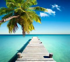 plage vacances cocotier (gmlabapp) Tags: seychelles plage cocotier palmier seychelle ocã©an tropique tropiques tropical tropicale exotique exotisme vacances vacance maldives maldive caraã¯bes caraibes antilles antille rã©publiquedominicaine rã©publique arbre mer bleu turquoise paradis paradisiaque palme praslin anse lazio ile ã®le lagon beau belle indien paysage coco sable blanc voyage destination soleil ensoleillã© station balnã©aire baie cã´te france