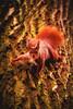 Red Squirrel (Marc Braner) Tags: ifttt 500px fair weather moody warm color park branch tree trunk springtime spring squirrel eurasian red sciurus vulgaris beliebte tags mammal cute
