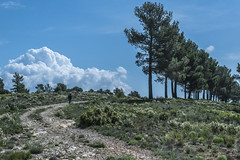 Un domingo cualquiera (*Nenuco) Tags: nenuco camino blue tree arasdelosolmos nikon d5300 18105 valencia spain sky cielo azul verde green rollingstoniano