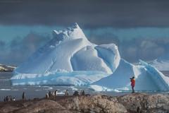 Antarctica Dream (Korzhonov Daniil) Tags: typical alt antarctica tall ship penguin penguins animals nikon gitzo lucroit iceberg