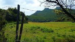 305 - Cap Corse, Rogliano, les montagnes derrière (paspog) Tags: rogliano corse capcorse france mai may 2018 prairie montagne montagnes prairy mountains mountain berg