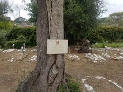 20180530_134802 (sobca) Tags: mission san carlos borromeo de carmelo saintjuníperoserra spanishmission catholic nationalhistoriclandmark