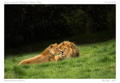 Parc animalier d'Auvergne (BerColly) Tags: france auvergne puydedome ardescouze parc animalier animaux animals bercolly portrait google flickr