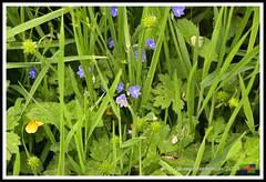 Snipe Dales 09.06.18 (31) (nowboy8) Tags: nikon nikond7200 redhill snipedales lincolnshirewildlifetrust lincolnshire wildlife walk trees