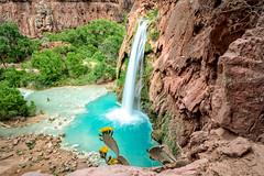 Havasu Falls (Patty Bauchman) Tags: arizona havasufalls southwest grandcanyon havasupai americansouthwest