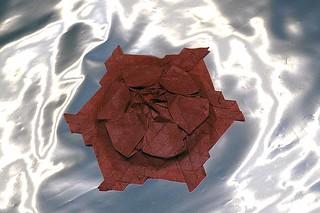 Starflower (Marjan Smeijsters)