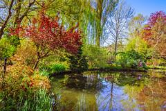 201804200646 (Leow Sama) Tags: claude monet jardin deau watergarden giverny reflection