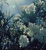 as long as it takes you (crumbled-cake) Tags: flowers spring summer film pale colorful calm breezy feeling uplifting bright morning sky sunrise floral life plants vintage