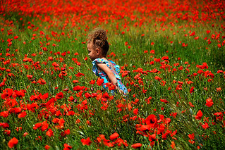 fillette dans le champs de coquelicots France / little girl in poppies field_0170