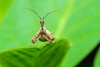 Insect Dr Evil (ClintHeeeerod) Tags: weaverwebspinnerpredatortrapargiopebuggardenmacro105mmnikkornikonmicrod750 preyingprayinginsectbeneficial fantasticnature