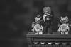 Grotesque (3rd-Rate Photography) Tags: thehunchbackofnotredame hunchback notredame lego minimates gargoyle quasimodo victorhugo toy toyphotography canon 5dmarkiii 100mm macro jacksonville florida 3rdratephotography earlware 365