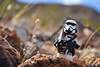 """""""It's coarse and it gets everywhere."""" (Alternate) (RagingPhotography) Tags: lego star wars patrol scout stormtrooper storm trooper imperial galactic empire outside outdoor outdoors mountain mountains mountainous ranges beautiful cool sweet pretty bright rock rocks rocky coarse rough plastic toy toys minifigure minifig figure custom customized fabric ragingphotography"""