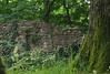 The wall (michaelmueller410) Tags: stone stein rocks ruine staufenburg stauffenburg harz gittelde bad grund wald bäume trees forest wall moss moos grass ivy efeu summer sommer green grün