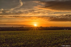 Sunset down on the farm (Steve Samosa Photography) Tags: cornfield crops sun sky farmland farming sunset rainhill england unitedkingdom gb