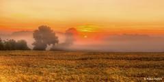 sunrise (Klaus Kehrls) Tags: sunrise sonnenaufgang landschaften natur felder getreide bäume nebel morgendunst idylle schleswigholstein