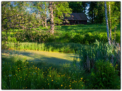 June 2008 Revisited #3 (Krogen) Tags: norge norway norwegen akershus romerike nes vormsund krogen olympuse3 landscape landskap sommer summer
