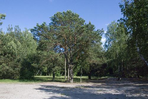 Шацький Національний Природний Парк Озеро Пісочне Сосни InterNetri  Ukraine 353