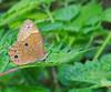 Leafy Diana (mishko2007) Tags: lethediana korea 105mmf28