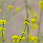 Wildflower Honey In Progress thumbnail