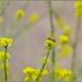 Wildflower Honey In Progress