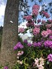 Flower in the city (akerrzz) Tags: rhododendron texture bark tree purple green pink botanicalgardens belfast greenhouse sky