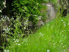 Orange-tip and cowslips, 2018 May 19 (Dunnock_D) Tags: uk unitedkingdom britain fife standrews green grass trees kinness burn butterfly male orangetip ladebraes gb scotland