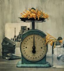 (donna leitch) Tags: square stilllife tabletop scale tins flowers orange honeysuckle vine mandarin mandarinhoneysuckle jar summer kitchenscale foodscale vintage bakingtins