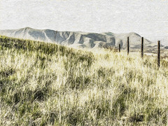 Crest The Hill (p) (davidseibold) Tags: america barbedwire benaroad california fence grass hill kerncounty painting photosbydavid plant sky unitedstates usa