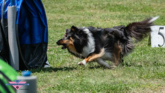 _DSC1214 (SeverX9) Tags: sony alpha 6500 70200gf4 dog run