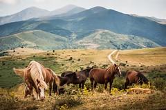 wild horses, like a nice dream (*BegoñaCL) Tags: caballos montaña hike larioja cielo begoñacl