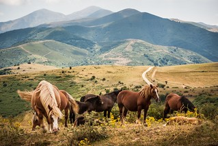 wild horses, like a nice dream