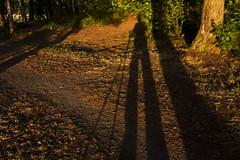 IMG_9408 (harri.hedman) Tags: tampere rauhaniemi harri hedman canon g1x sun eveningsun sunset auringonlasku