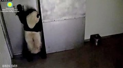2018_06-09i (gkoo19681) Tags: beibei chubbycubby fuzzywuzzy adorableears impatient treattime standingtall bleating searching demandingattention reaching sotall toocute beingadorable beingignored poorbaby precious knocking listening ccncby nationalzoo