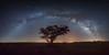 Arch (Alex Savenok) Tags: arava panorama paranriver desert arch milkyway milkywaygalaxy stars tree nightsky longexposure longexpo sky astrophoto astronomy southisrael israel israelnature samyang14mm d610
