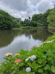 Turkey (Istanbul) Ataturk Arboretum (ustung) Tags: nature landscape tree flower pond garden botanic arboretum turkey istanbul