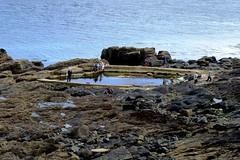 Rockpool, Mousehole, Cornwall, England (Joseph Hollick) Tags: england cornwall mousehole rockpool pool rock