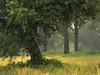 Misty Morning in the Estuary Rhine-Sieg (Netsrak) Tags: baum bäume dunst europa europe landschaft meindorf natur nebel sieg fog haze landscape mist