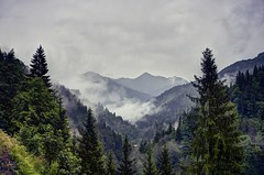 Looking forward to be in the Swiss Alps again (PeterThoeny) Tags: schuders schiers swissalps switzerland grisons prättigau rain wet forest tree day outdoor cloud clouds cloudy fog mist sky mountain landscape 3xp raw nex6 photomatix selp1650 hdr qualityhdr qualityhdrphotography fav100