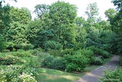 Київ, Ботанічний сад імені Фоміна Ukraine InterNetri 31
