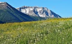 Swiss Mountain Meadow_Brail_090618_01 (DS 90008) Tags: mountainmeadows mountain switzerland