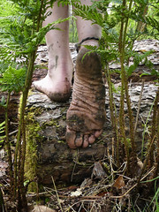 Framed by ferns (Barefoot Adventurer) Tags: barefoot barefooting barefoothiking barefooter barefeet barefooted baresoles barfuss anklet woodland wrinkledsoles woodlandsoles earthsoles earthing earth earthstainedsoles energy ferns toughsoles healthyfeet happyfeet hardsoles livingleather leathertoughsoles leathersoles toes texture callousedsoles connected strongfeet stainedsoles soles