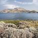 Aegean Spring