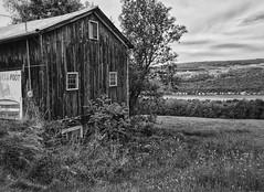 Old Barn Overlooking Keuka (LJS74) Tags: wineregion monochrome bw blackwhite blackandwhite landscape newyorkstate fingerlakes winery vineyard hamondsport keukalake barn