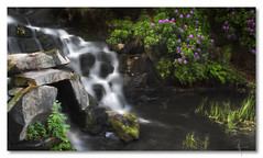 Windsor cascades - by John Runions (jrunions1) Tags: windsorgreatpark cataract longexposure rhododendron cascades