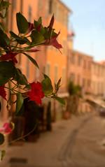 Bormes les Mimosas (Chocolatine photos) Tags: bormes village fleur provence orange printemps ruelle extérieur flickr fleurs flowers nikon photo photographesamateursdumonde
